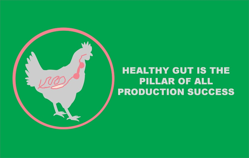 Healthy Gut is the Pillar of all Production Success